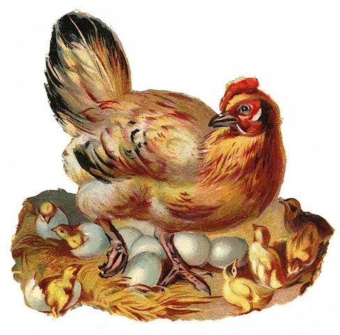 Free-vintage-chicken-and-baby-chicks-easter-clip-art